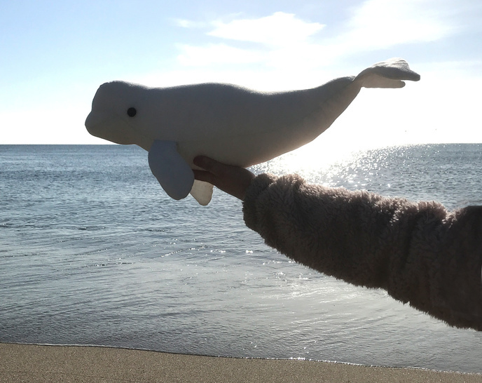 Beluga Whale - Craft sewing project - pdf