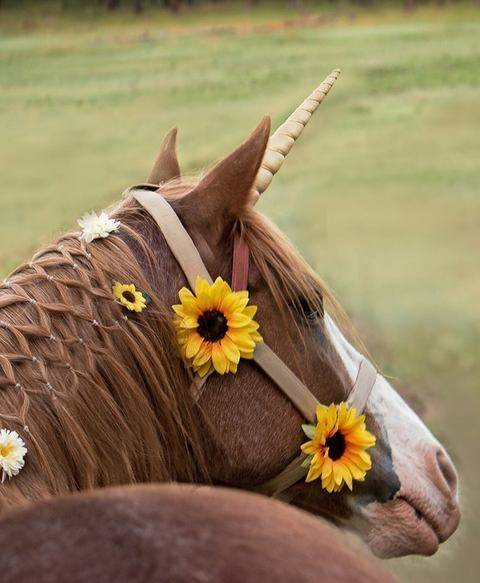 Unicorn Horn Accessory for Live Horse Includes 5 Sizes