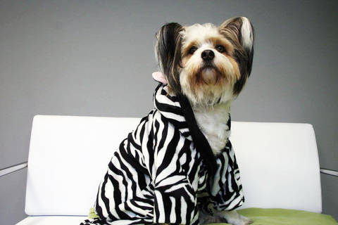 "Hundebademantel ""FREYA"" eBook Schnittmuster mit Tutorial"