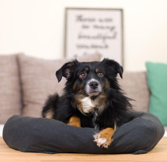Nähanleitung: Hundebett selber machen bei Makerist - Bild 1