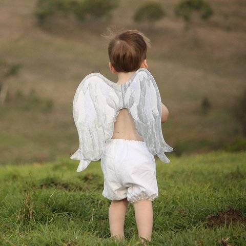 Angel Wings - Small + Medium
