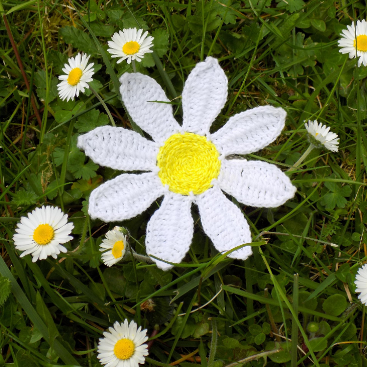 Daisy Flower Brooch Crochet Pattern (Upcycling)