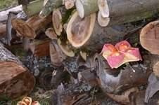 Makerist - Osterkörbchen gefunden?! - 1