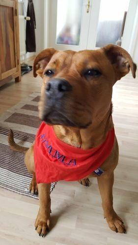 Makerist - Hundehalstuch für Emma - Nähprojekte - 2
