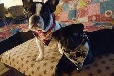 Makerist - Zwei Halstücher für meine beiden Enkel-Hunde Mats und Barney - 1