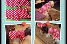 Makerist - Hundemantel  - 1