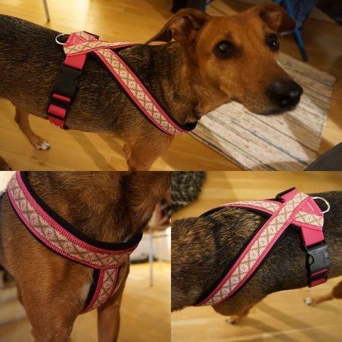 Makerist - Hundegeschirr aus Neopren - Nähprojekte - 1