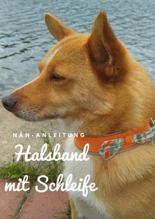 Hunde-Halsband mit Schleife