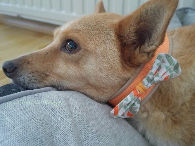Makerist - Hunde-Halsband mit Schleife - Nähprojekte - 3