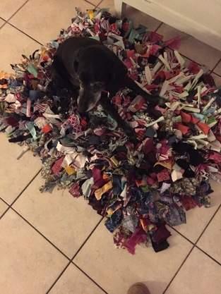 Schnüffelteppich für Hunde