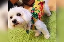 Makerist - Hunde Shirt aus Viskosejersey - 1