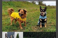 Makerist - Regenmantel für Hunde - 1