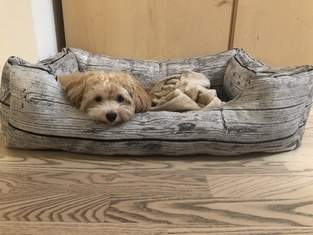 Hundebett mit Reißverschluss