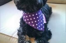 Makerist - Halstuch für kleinen Hund - 1