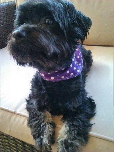 Makerist - Halstuch für kleinen Hund - Nähprojekte - 2