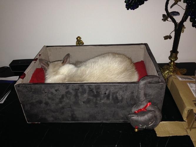 Makerist - Boite à chat - Créations de couture - 1