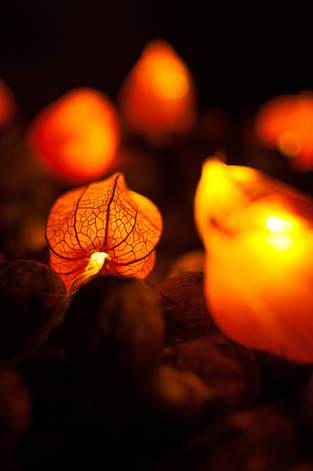 Es wird herbstlich: Lampion-Lichterkette mit Physalisblüten