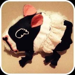 Makerist - Meerschweinchen - 1