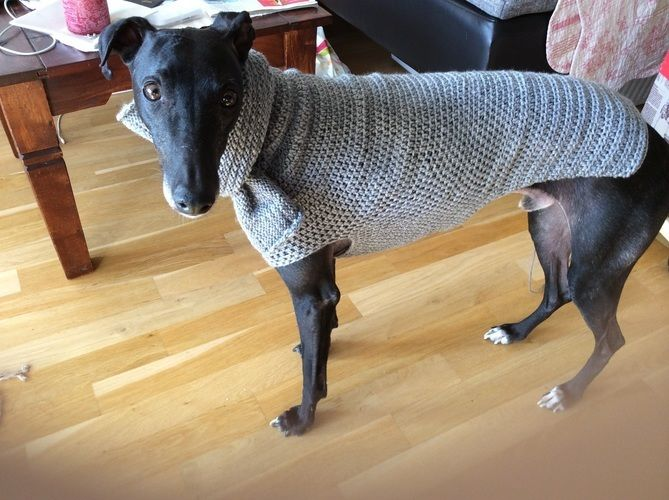 Makerist - Hundepulli gehäkelt, mit gestricktem Kragen - Häkelprojekte - 1