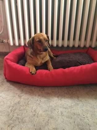 Makerist - Hundebetten - 1