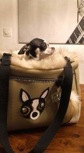 Makerist - Hundetasche für meinen Chihuahua - Nähprojekte - 3